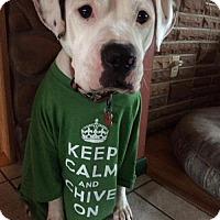 Adopt A Pet :: Tucker - IN TRAINING - Troy, MI