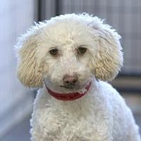 Adopt A Pet :: Odell - Colorado Springs, CO