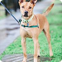 Adopt A Pet :: Zeke - Houston, TX