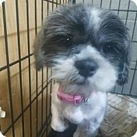 Adopt A Pet :: Mei Ling - Ogden, UT