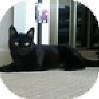 Adopt A Pet :: Kiki - Vancouver, BC