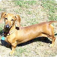 Adopt A Pet :: Missy - San Jose, CA