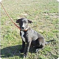 Adopt A Pet :: Ace - Adamsville, TN