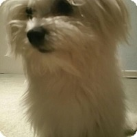 Adopt A Pet :: Penny - Lake Forest, CA