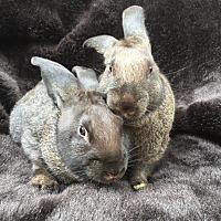 Adopt A Pet :: Argus & Filius - Watauga, TX