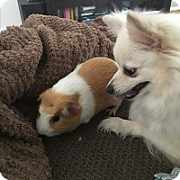 Adopt A Pet :: Hammy (COURTESY POST) - Baltimore, MD