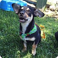 Adopt A Pet :: Inga - San Leon, TX