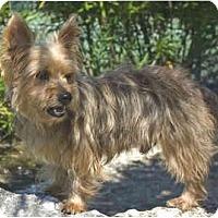 Adopt A Pet :: Major - Gulfport, FL