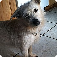 Adopt A Pet :: Buffy - Somers, CT