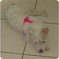 Adopt A Pet :: Ariel - Miami, FL