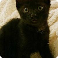 Adopt A Pet :: Harry - Reston, VA