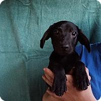 Adopt A Pet :: Austin - Oviedo, FL