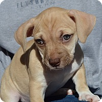 Adopt A Pet :: PRISSY - Portsmouth, NH