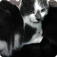 Adopt A Pet :: McGraw - Sterling Hgts, MI