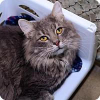 Adopt A Pet :: Luke - Greenwood, SC