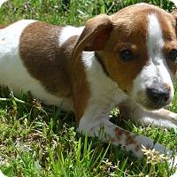 Adopt A Pet :: laverne - Manning, SC