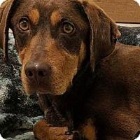 Adopt A Pet :: Maria - Valparaiso, IN