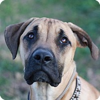 Adopt A Pet :: Chloe - Cookeville, TN