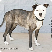 Adopt A Pet :: GIRL FRIEND - Modesto, CA