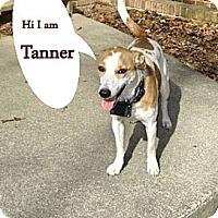 Adopt A Pet :: Tanner 2 - Franklinton, NC