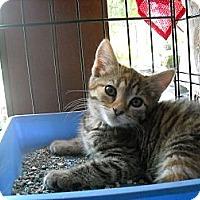Adopt A Pet :: Trixie - Arlington, VA