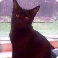 Adopt A Pet :: Edward (Eddie) - Portland, OR
