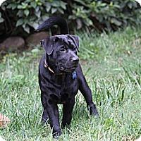 Adopt A Pet :: Cinder - Tucker, GA