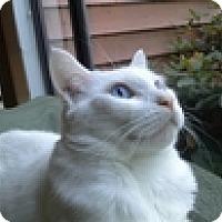 Adopt A Pet :: Benito - Vancouver, BC
