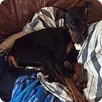 Adopt A Pet :: Luna - Malaga, NJ