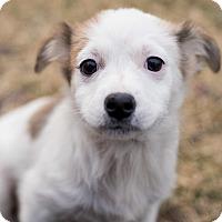 Adopt A Pet :: Reggie - Minneapolis, MN