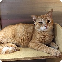 Adopt A Pet :: Hera - McDonough, GA