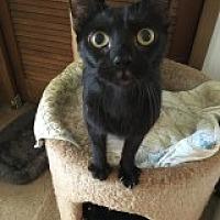 Adopt A Pet :: Bruno - Naples, FL