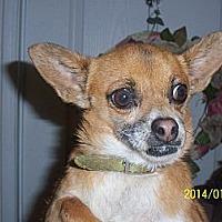 Adopt A Pet :: Mia - Littlerock, CA