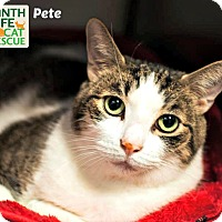 Adopt A Pet :: Pete - Oakville, ON