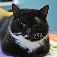Adopt A Pet :: Thumper170072 - Atlanta, GA