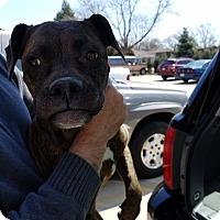 Adopt A Pet :: Destiny - Hainesville, IL