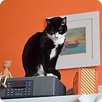 Adopt A Pet :: Kyra - Brooklyn, NY