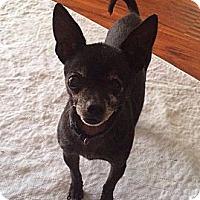 Adopt A Pet :: Oscar - Poulsob, WA