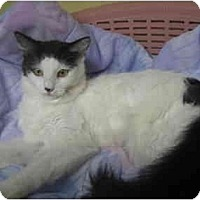 Adopt A Pet :: Dolly Madison - Lombard, IL