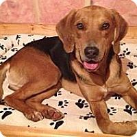 Adopt A Pet :: Zeppelin - Douglas, ON