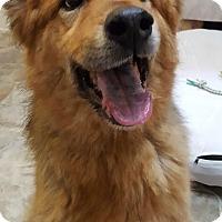 Adopt A Pet :: Christian - Fennville, MI