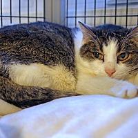 Adopt A Pet :: Emily - Victor, NY