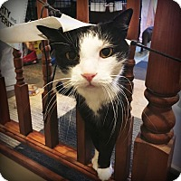 Adopt A Pet :: PHANTOM! - Philadelphia, PA
