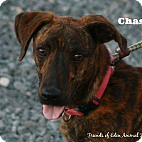 Adopt A Pet :: Chase - Eden, NC