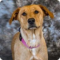 Adopt A Pet :: Penny D3535 - Shakopee, MN