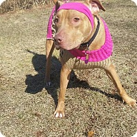 Adopt A Pet :: HONEY BEAR - Bridgewater, NJ