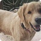 Adopt A Pet :: Aslan