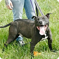 Adopt A Pet :: Roy - Cincinnati, OH
