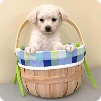 Adopt A Pet :: Wolfgang - Sacramento, CA