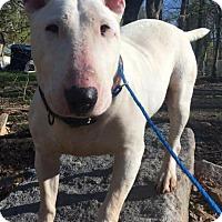 Adopt A Pet :: Zeus - Pottsville, PA